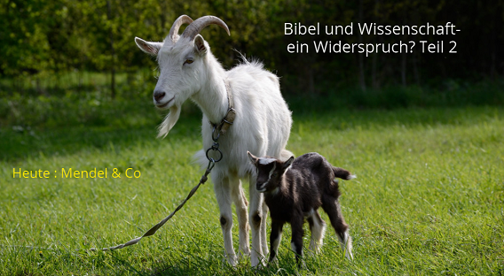 Mutter Ziege mit Baby Ziege. Es geht um Mendelsche Regeln.
