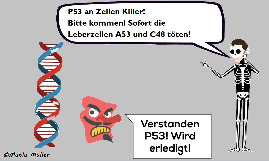 P53-Gen